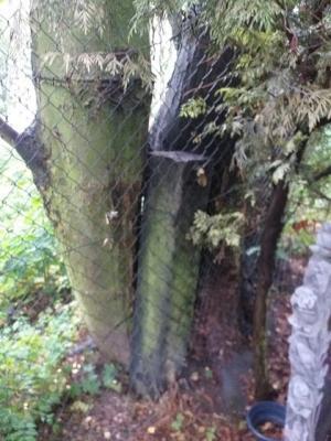 strom23-1