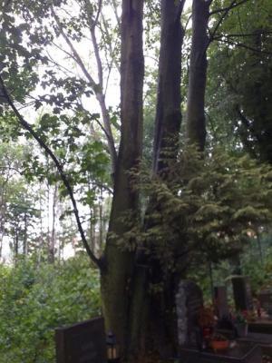 strom23-2