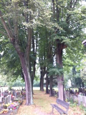 stromy-alej